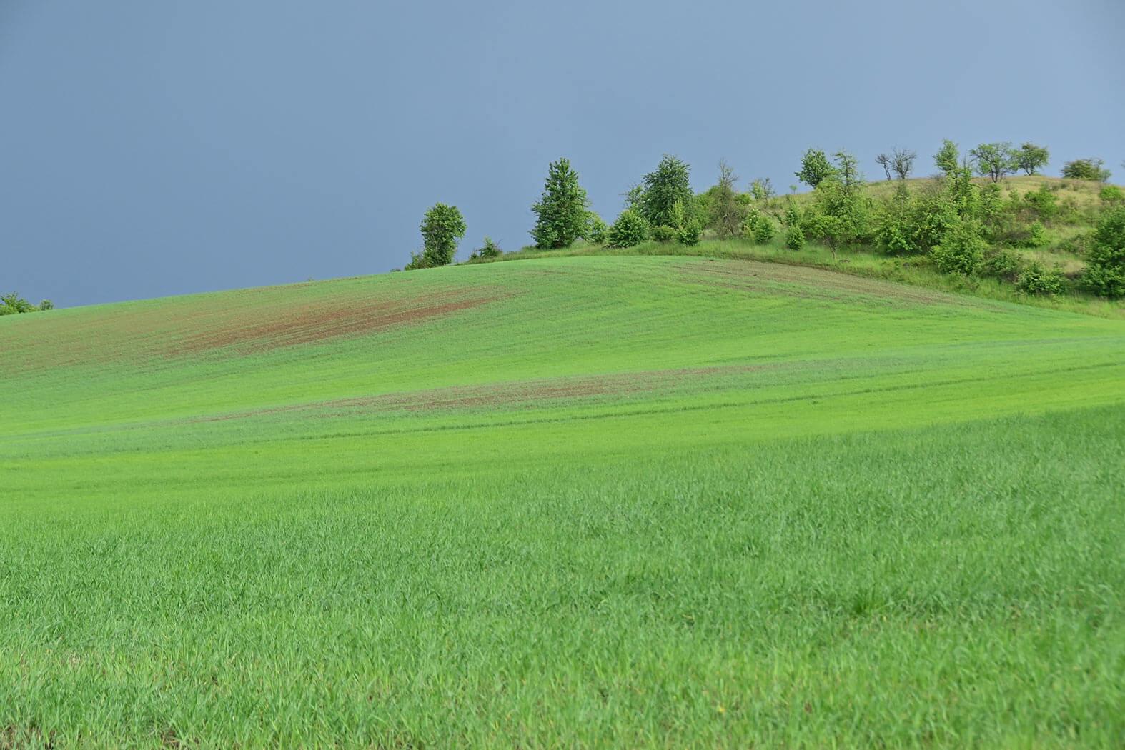 Reisen mit Kind: Unfassbar schöne Uckermark, Hügellandschaft bei Brodowin, Kleiner Rummelsberg